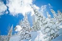 Tree Powder Skiing